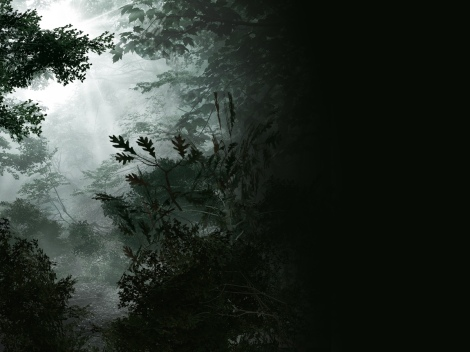 3d forest visual effects